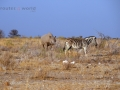 Viaje Namibia 16 184
