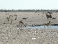 Viaje Namibia 16 198