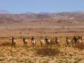 Viaje Namibia 16 199